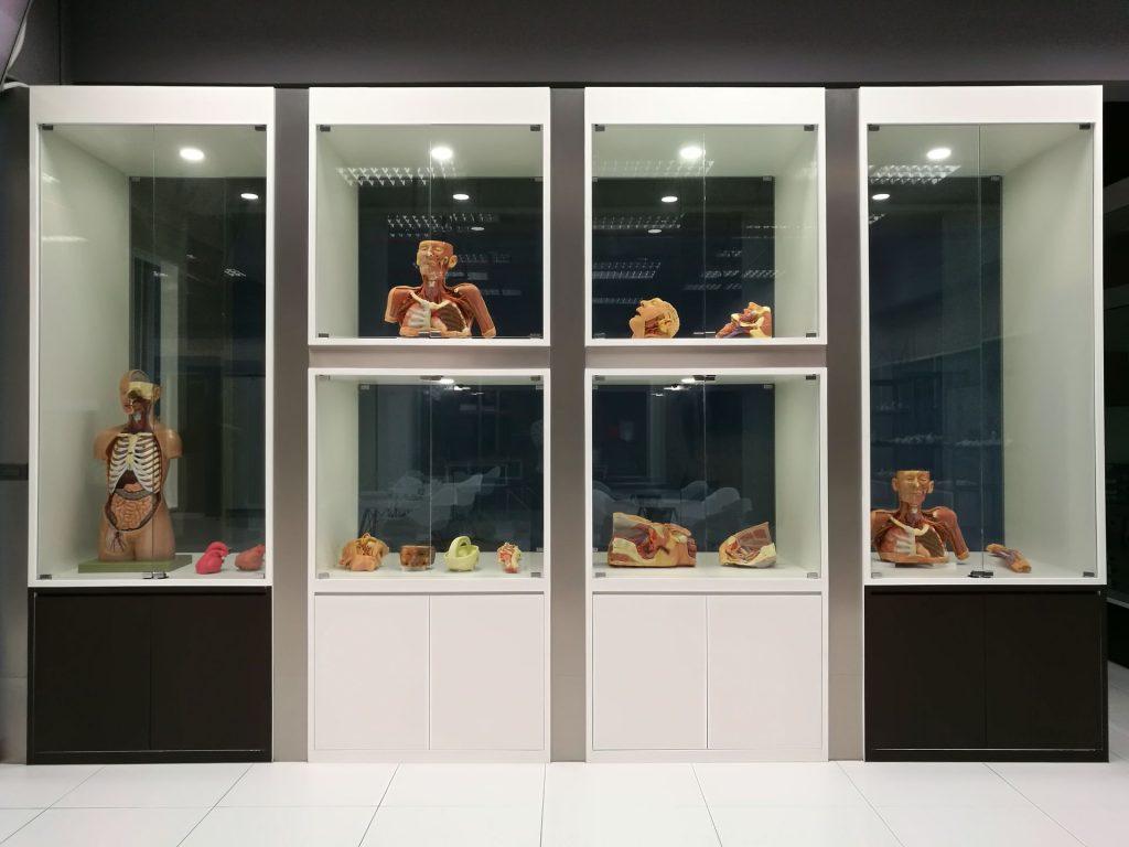 Anatomy Museum Model-01