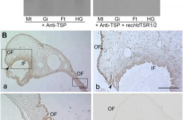 Characterization of Thrombospondin Type 1 Repeat in Haliotis Diversicolor and its Possible Role in Osteoinduction